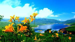 flowers_ocean